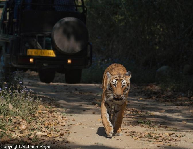 Copy of Tiger-10-02