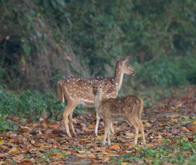 Deer-14-02